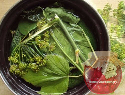malosolnye-ogurcy-bystrogo-prigotovleniya-v-kastryule-recept